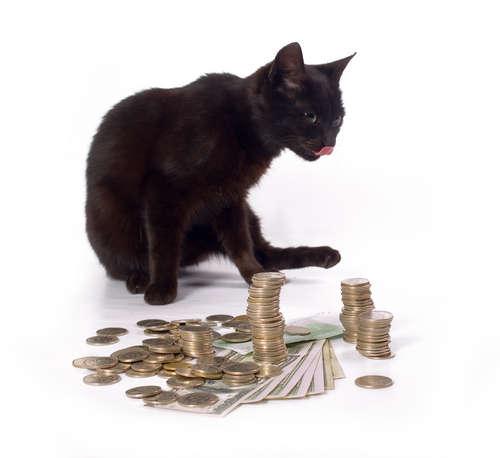 Glückbringende schwarze Katze sitzt bei einem Stapel von Bargeld